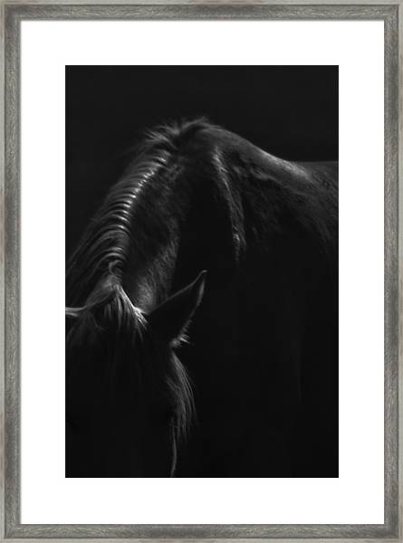Wild Mustangs Of New Mexico 14 Framed Print