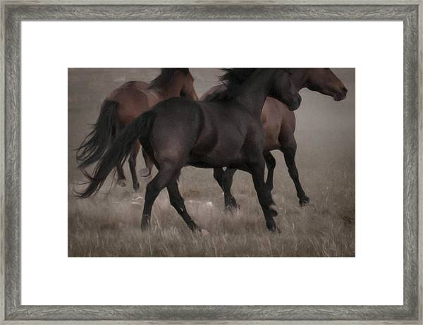 Wild Mustangs Of New Mexico 16 Framed Print