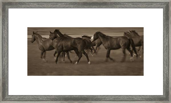Wild Mustangs Of New Mexico 17 Framed Print