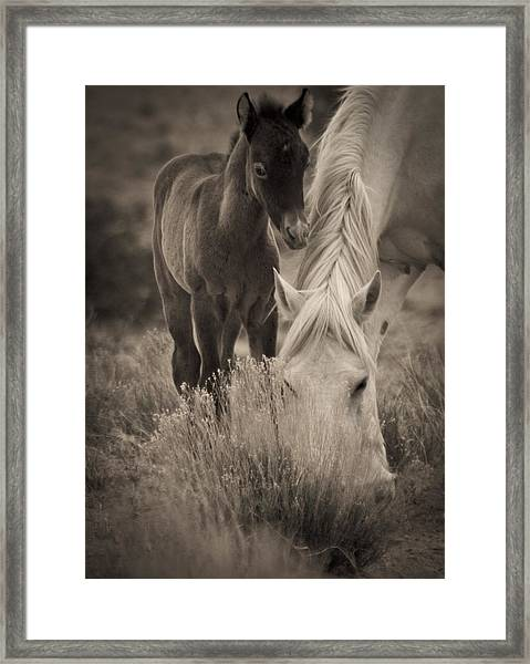 Wild Mustangs Of New Mexico 19 Framed Print