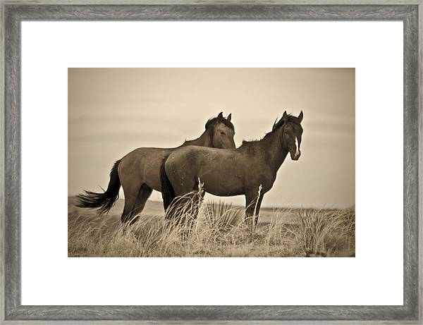 Wild Mustangs Of New Mexico 3 Framed Print