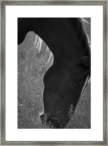Wild Mustangs Of New Mexico 33 Framed Print