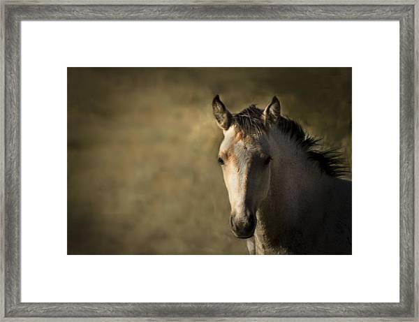 Wild Mustangs Of New Mexico 35 Framed Print