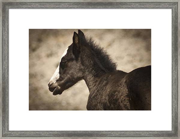 Wild Mustangs Of New Mexico 37 Framed Print