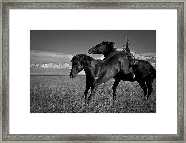 Wild Mustangs Of New Mexico 9 Framed Print