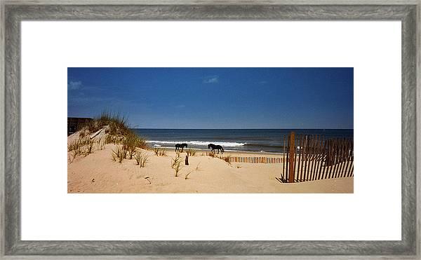 Wild On The Beach Framed Print