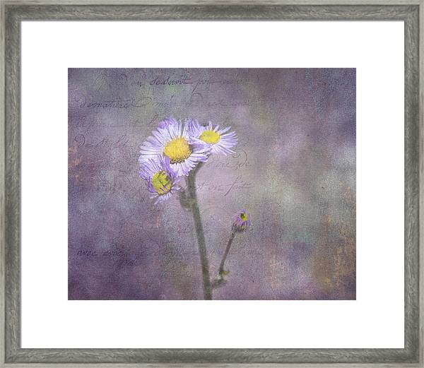 Wild Purple Aster  Framed Print