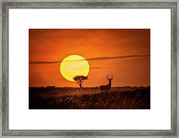 Wild Sunrise Framed Print