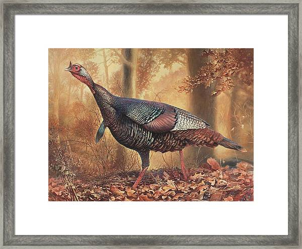 Wild Turkey Framed Print