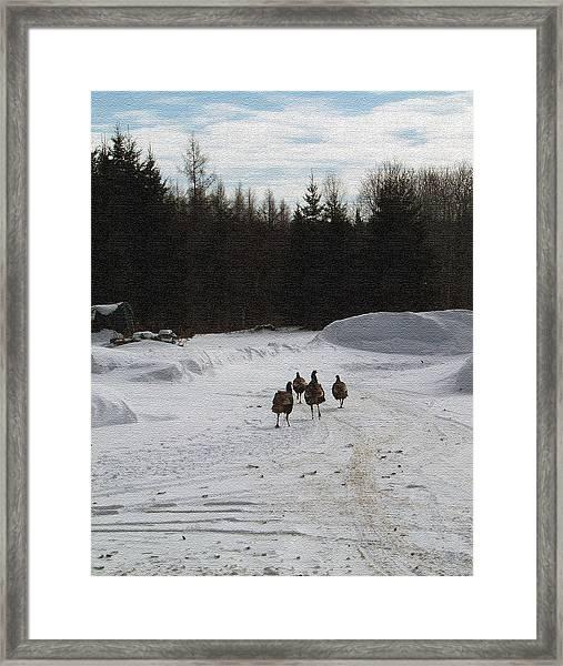 Wild Turkeys Running Framed Print