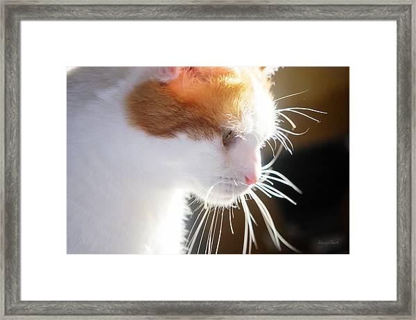 Wild Whiskers Framed Print