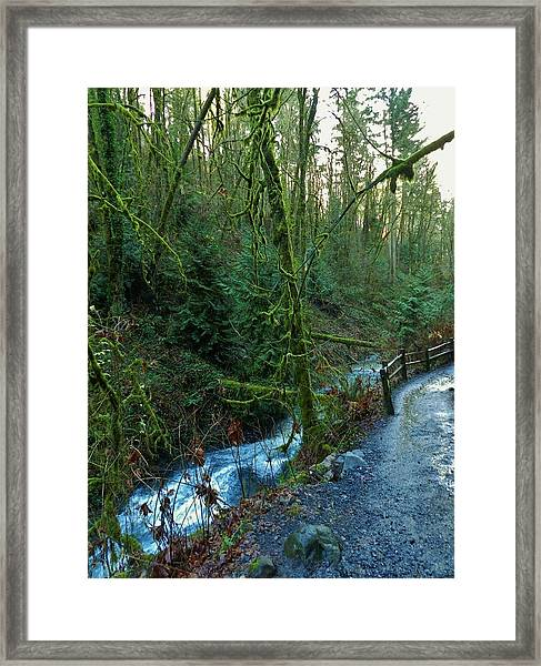 Wild Wood Trail Framed Print by Charles Lucas