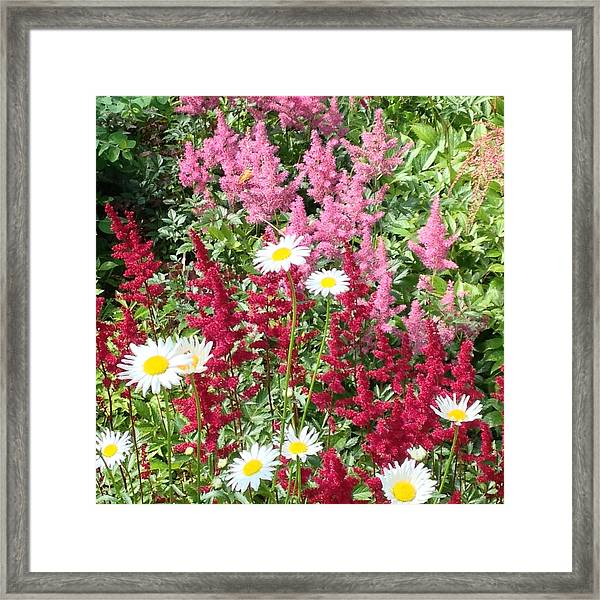 Wildflower Medley Framed Print