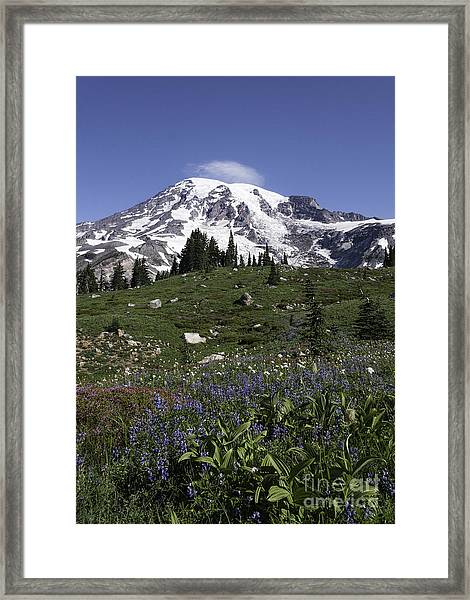 Wildflower Season At Mt Rainier Framed Print