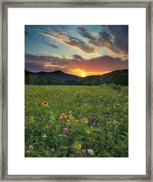 Wildflower Sunset Framed Print