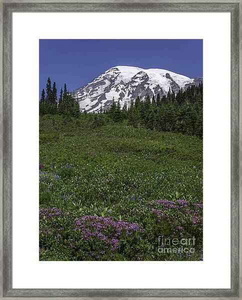 Wildflowers And Mt Rainier Summit Framed Print