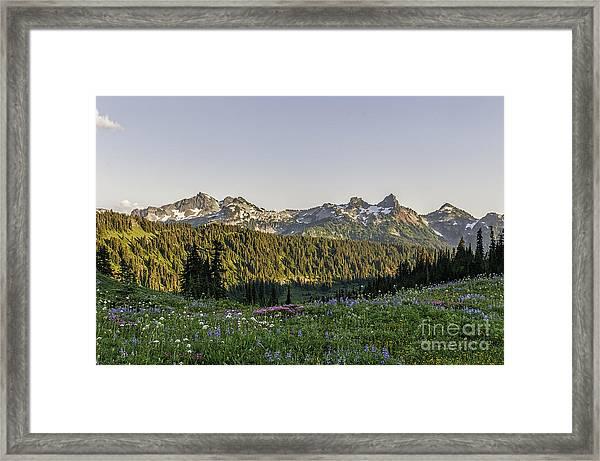 Wildflowers And The Tatoosh Range Framed Print