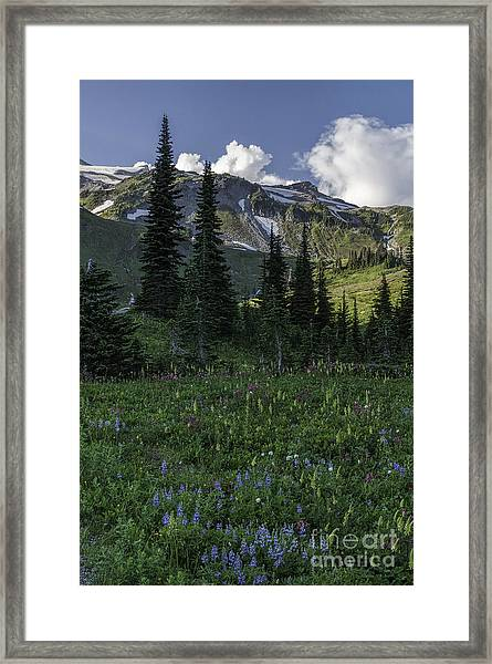 Wildflowers At Rainier Framed Print