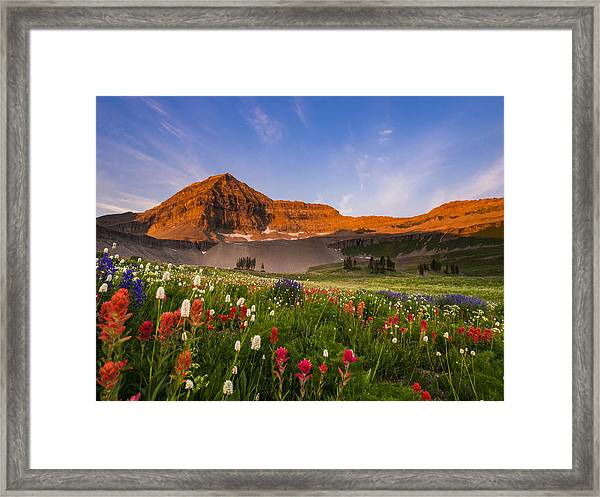 Wildflowers In Bloom Framed Print