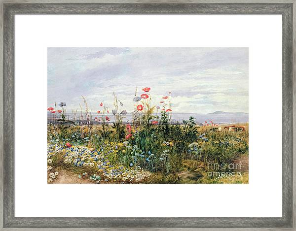 Wildflowers With A View Of Dublin Dunleary Framed Print
