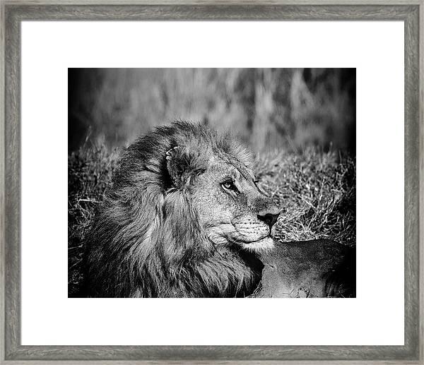 Framed Print featuring the photograph Wildlife Lion by Gigi Ebert