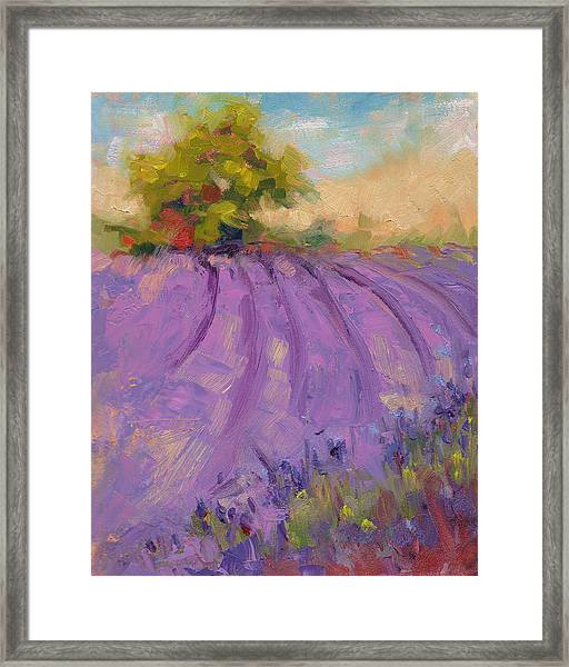 Wildrain Lavender Farm Framed Print