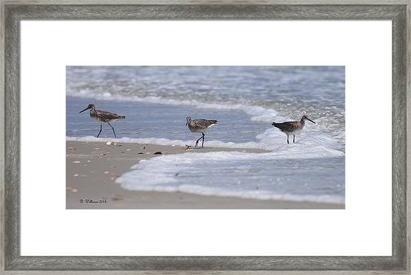 Willets On Ocracoke Framed Print