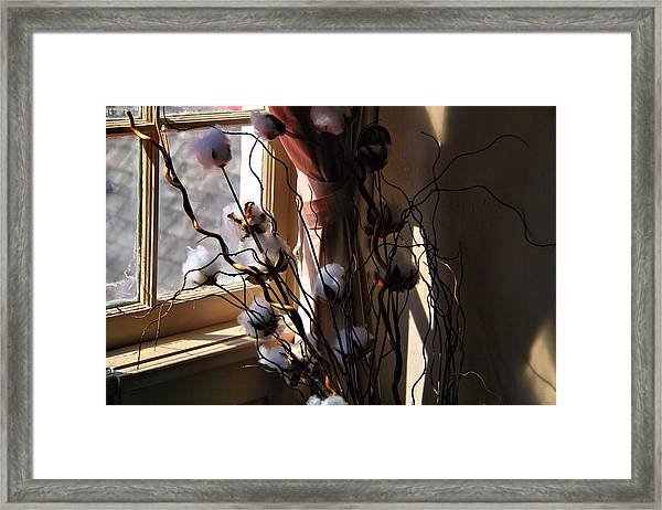 Willow And Cotton Framed Print