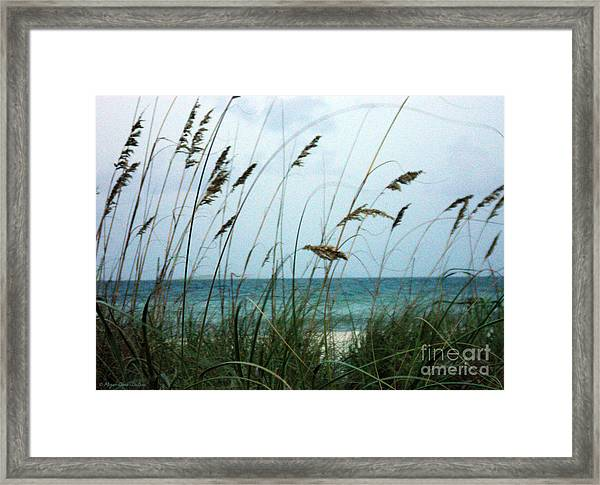 Wind Dancers Framed Print