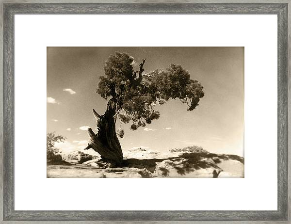 Wind Swept Tree Framed Print