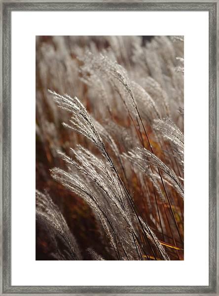 Windblown Grass Framed Print