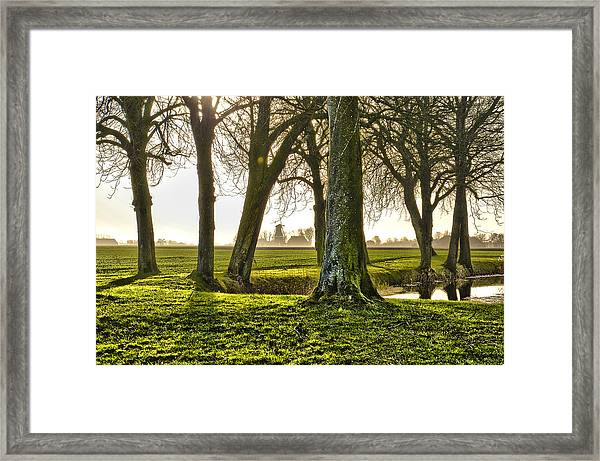 Windmill And Trees In Groningen Framed Print