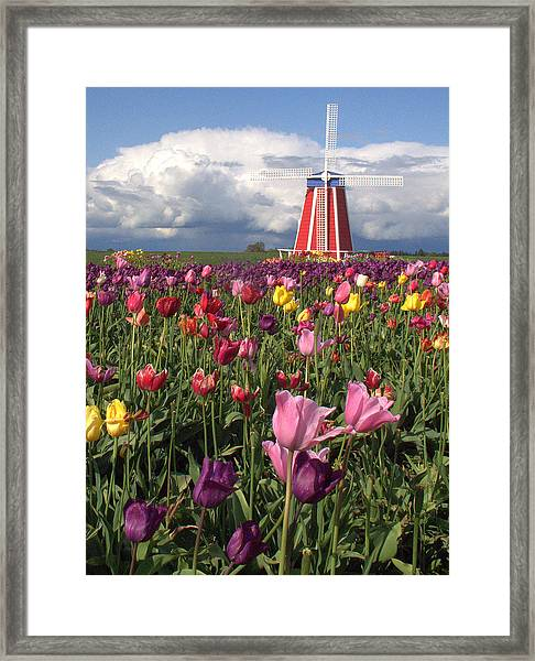 Windmill In The Tulips Framed Print