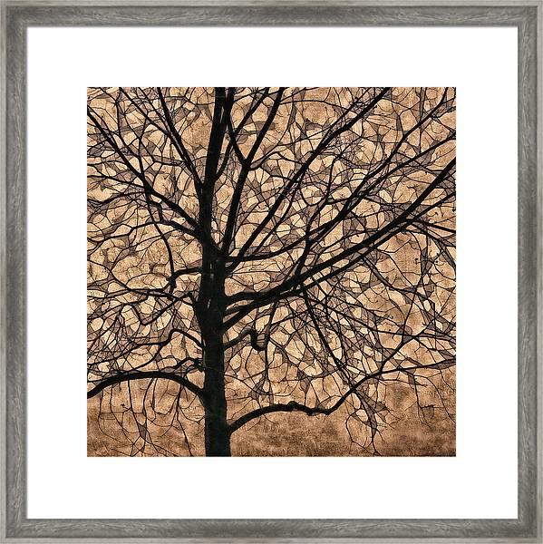 Windowpane Tree In Autumn Framed Print