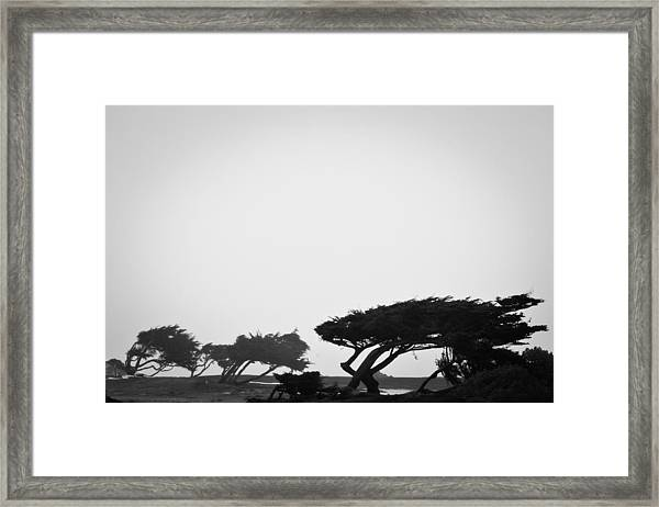 Windswept Shoreline Framed Print