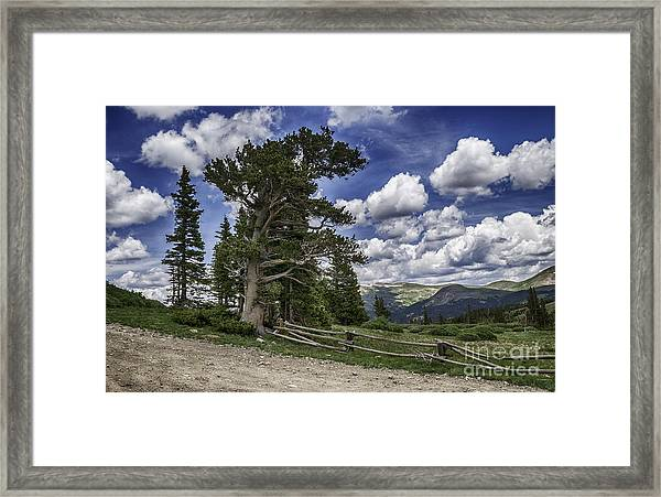 Windy Ancients Framed Print