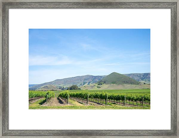 Framed Print featuring the photograph Wine Country Edna Valley by Priya Ghose