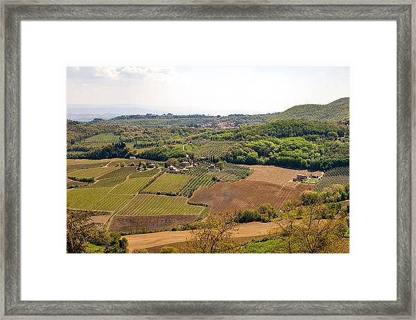 Wine Fields In Tuscany Framed Print by Jakob Montrasio