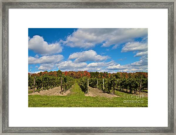 Wine In Waiting Framed Print