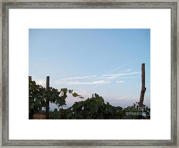 Wine Yards In Loppiano Framed Print