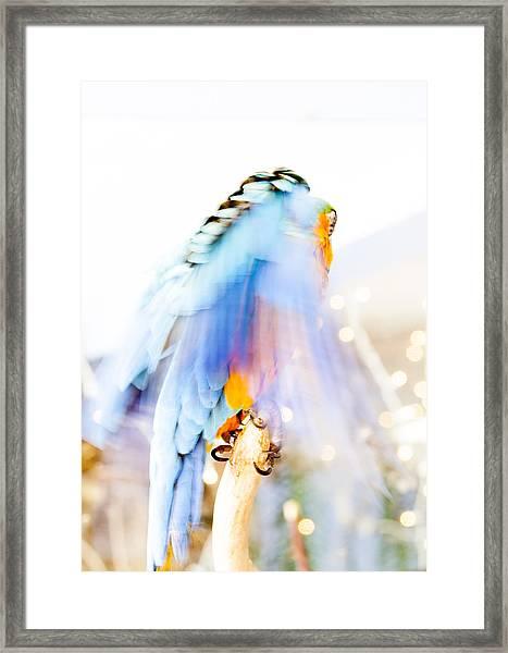 Wing Dream Framed Print