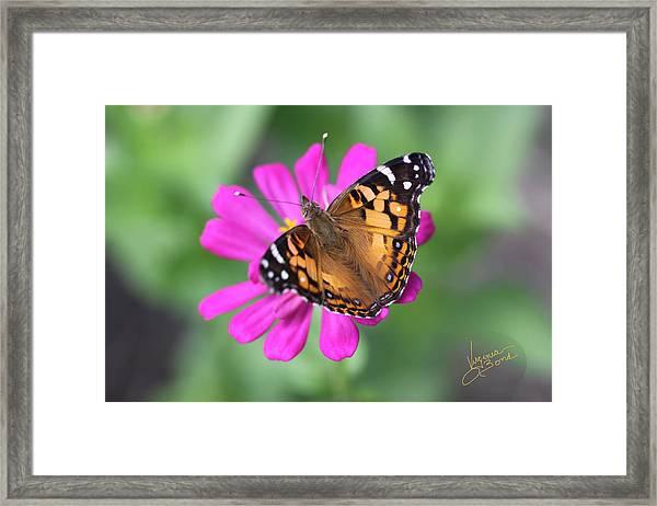 Winged Beauty Framed Print