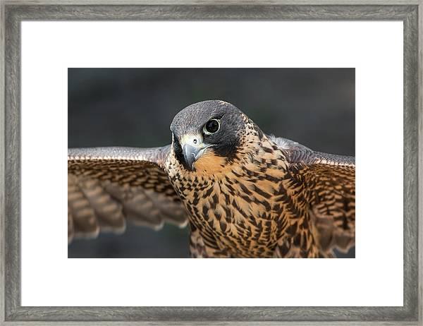 Winged Portrait Framed Print