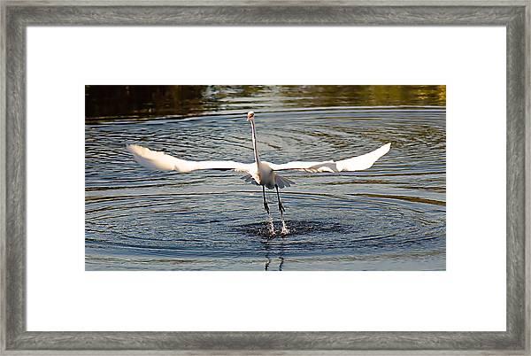 Wingspan Framed Print