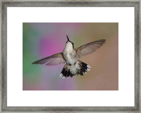 Wingspread Framed Print
