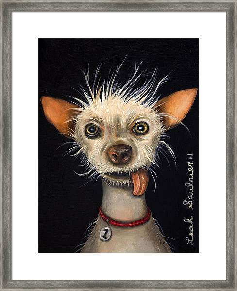 Winner Of The Ugly Dog Contest 2011 Framed Print