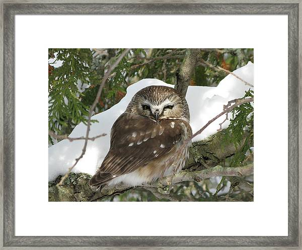 Winter Beauty Framed Print