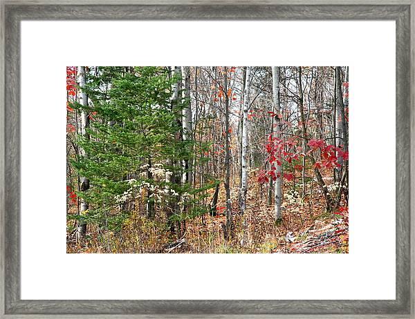 Winter Beginning Framed Print by Carolyn Reinhart