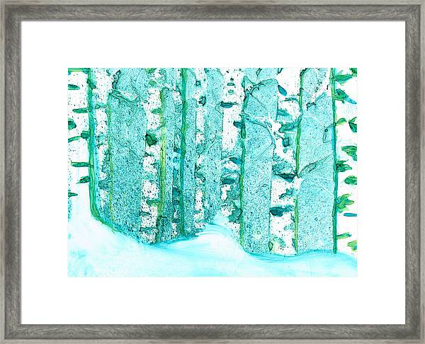Winter Birch 2 Framed Print