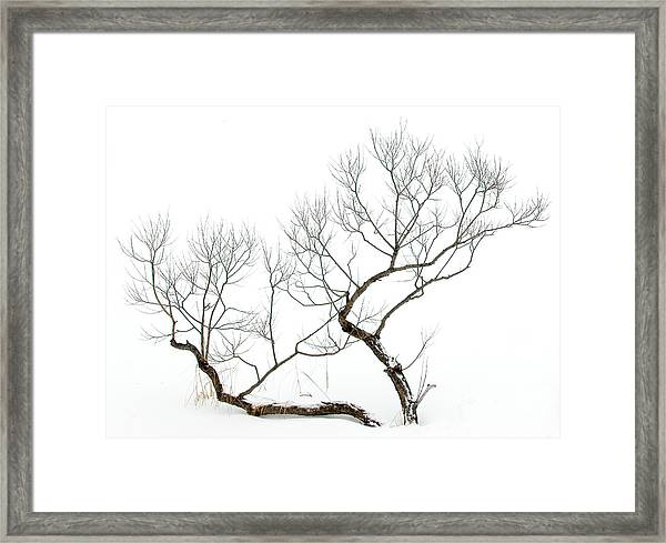 Winter Bonsai Framed Print
